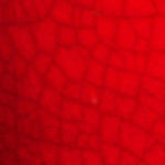 Rosso Selenio