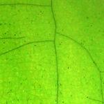 Verde Cromo